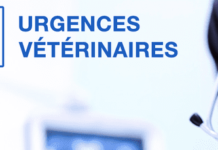 Urgences Veterinaires